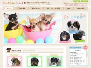福岡のブリーダーEGAO-NI-CHU犬舎(チワワ / ミニチュアダックス / トイプードル)
